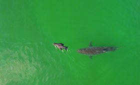 How I Got the Shot: Photographing Great White Sharks off Cape Cod